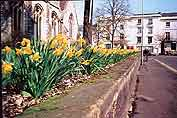 Daffodils outside St Nicholas Church